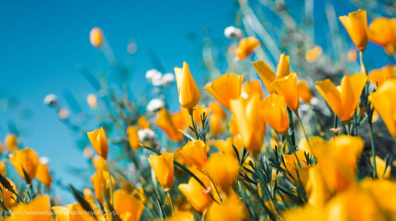 Spring : Delightful Season To Enjoy